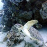 Marsa Alam 130szkoła nurkowania kraków