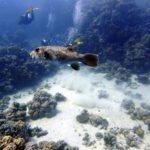 Marsa Alam 139szkoła nurkowania kraków