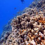 Marsa Alam 142szkoła nurkowania kraków