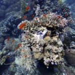 Marsa Alam 42szkoła nurkowania kraków