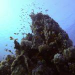 Marsa Alam 84szkoła nurkowania kraków