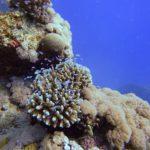 Marsa Alam 94szkoła nurkowania kraków