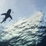Safari nurkowe w Egipcie - Brothers-Daedalus-Elphinstone 11szkoła nurkowania kraków